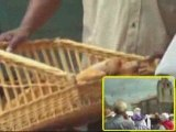 Fêtes du pain lauraguel 2009