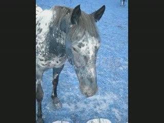 New Club, New Horses ....