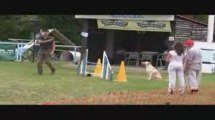 Alaska Jumping Agility Messimy 19/07/2009
