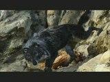 Extrait 2 Pierre et le Loup Pierre et le loup