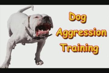 Dog Aggression Training-Dog Aggression Training Made Easy!