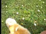 Jules promenade dans le jardin