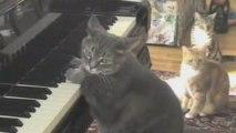 CATcerto, Nora the Piano Cat et Mindaugas Piecaitis