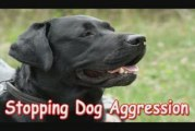 Stopping Dog Aggression -Stopping Dog Aggression Is Easy!