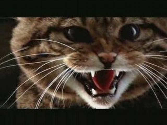 Last of the Scottish Wildcats DVD preview trailer