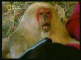 Quand les singes soutiennent le présidents