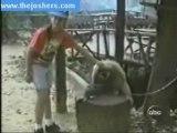 singe massage - monkey headscratch