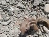 Ecureuils pas farouches