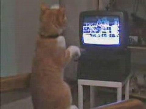 Die boxende Katze