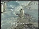 Pingouin humour