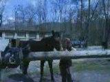 Mes chevaux (1)