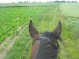 Balade le 18 juin 2008 chemin