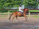 mon cheval é moi