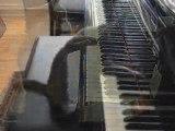 Chat qui joue au piano.