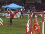Border Terrier agility Carolechaumont 2008