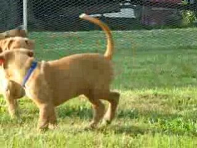 el Negma puppies 3.7.2008