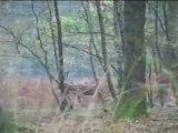 Paysages d'Ardennes