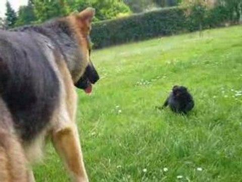 Hund versus Katze