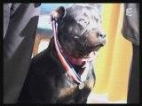 rottweiler héros de Marseille