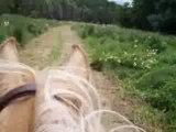 Lise et Audrey à cheval au galop 2