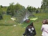 Orcières merlette 2008
