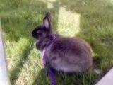 Bunny, ma lapine
