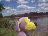 Kiki chien mauve au bord de La Loire à Bonny sur Loire