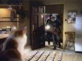 Chat et chien malin