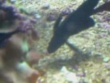 La vie des poissons - poisson noir