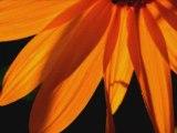 Hymne au soleil edmond rostand