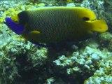 Diaporama plongée aux maldives 2008