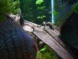 Videos larves nage libre 001