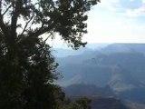 vol d'oiseaux au dessus du grand canyon