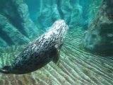 Acquario di Genova: video foche