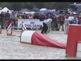 Agility et Jumping Masters 2008