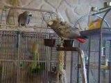 Jaco et Zoé mes 2 gris gris du gâbon