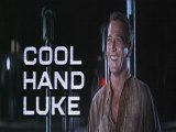 Luke la main froide 1/7