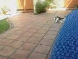 mon chat joue avec une plume