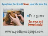 Sick Dog Symptoms - Symptoms of Pet Illness - Dog Symptoms