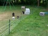 La meute dans la nouvelle maison 28 07 2008 002