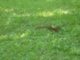 écureuils bois coulonges quebec fun