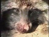 La cruauté de l'Homme sur l'animal