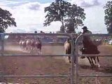 Spectacle chevaux et cowboy a bain de bretagne