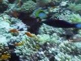 Plongée Sharm El Sheikh Août 2008