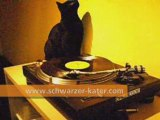 Black cat scratching at a turntable
