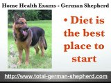 GSD home health exams - German Shepherd  health exams