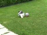 Dudu et son ballon!