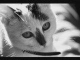 Photos chats noir et blanc