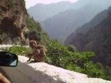 maman et bébé singes