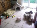 les bebes de shania  le 5 septembre 2008